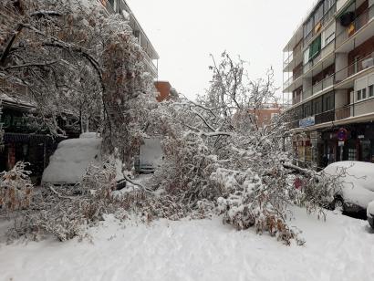 Los árboles caídos tras Filomena son hoy fuente de energía en hogares e industrias