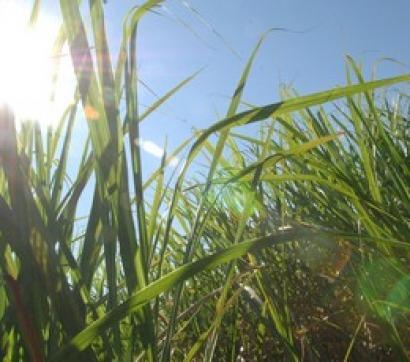 Una quinta parte de la energía se podría cubrir con biomasa sin afectar a la alimentación