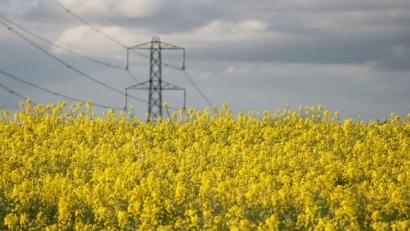 Europa debe producir bioenergía de manera más eficiente