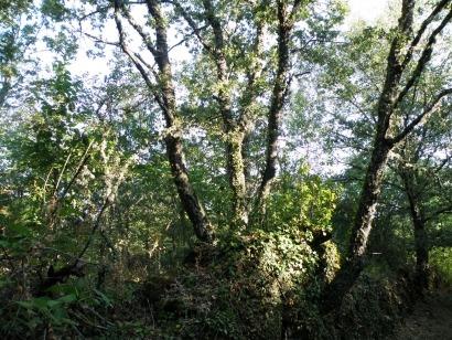 Cómo gestionar la biomasa del matorral para que produzca energía, no incendios