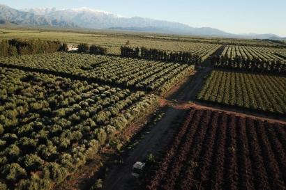 Residuos de olivos convertidos en pellets