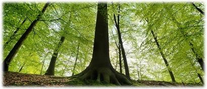 Los veinte años de Asemfo y su relación con la bioenergía