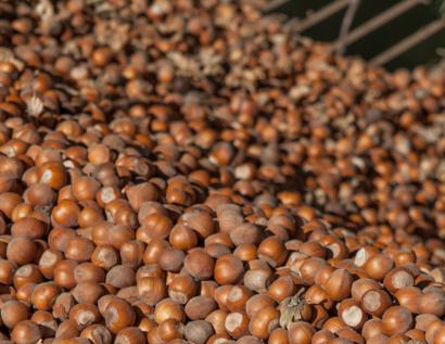 Ferrero Rocher: autoconsumo para sus secaderos con sus cáscaras de avellana