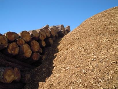 Científicos refuerzan el cuestionamiento del uso de biomasa forestal para producir energía