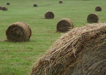 España ganaría 130 millones de euros al año si retribuyera mejor la biomasa