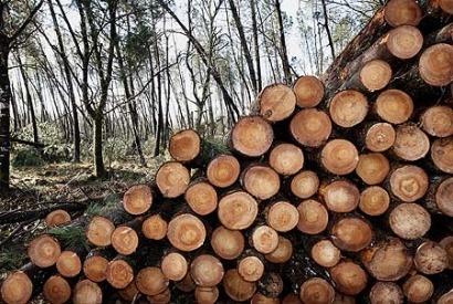 La biomasa empuja hacia arriba a las renovables en Andalucía