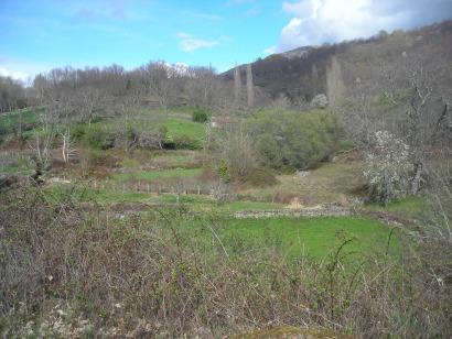 Repaso a la apuesta pública catalana por la biomasa