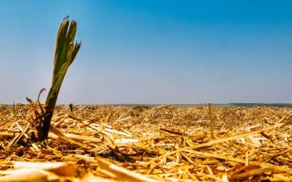 En los primeros cuatro meses de 2020 la biomasa aportó cerca del 4 % de la generación eléctrica