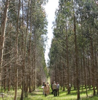 Investigación aplicada a la gestión forestal: se pide en España, se concreta en Finlandia