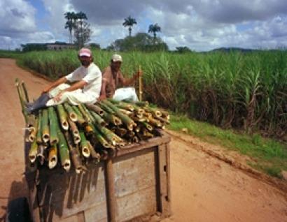 La electricidad con base en biomasa es la segunda fuente más importante y ya supera al gas natural