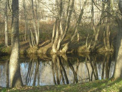 Los ecologistas airean nuevos estudios para cuestionar la sostenibilidad de la biomasa
