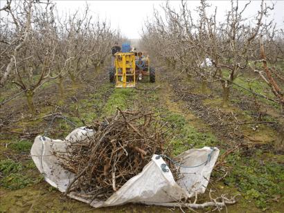 Eficiencia de la poda a la quema en el aprovechamiento energético de residuos agrícolas
