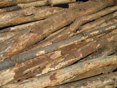 Forestalia proyecta una nueva central de biomasa en Guardo, Palencia