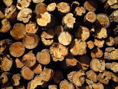 """Deberes post-elecciones: """"fomentar la demanda de biomasa forestal como energía renovable"""""""