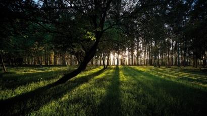 Ence: buenos números gracias a la biomasa y Mérida en marcha