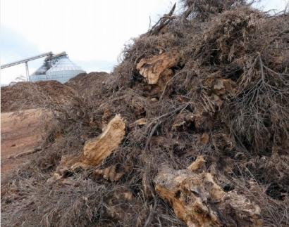 La CE puede modificar unos criterios de sostenibilidad de la biomasa que aún no se han puesto en marcha