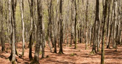 Es más segura la biomasa forestal de Amurrio que el gas de Argelia