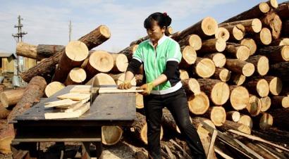 """FAO: """"Las políticas forestales deben abordar el papel que desempeña la energía"""""""