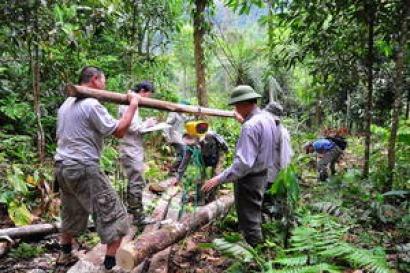 Destinar árboles para bioenergía sabiendo sus reservas de carbono