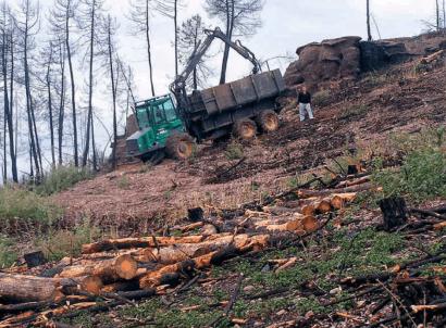 La bioenergía puede (y debe) contribuir a la reducción de incendios