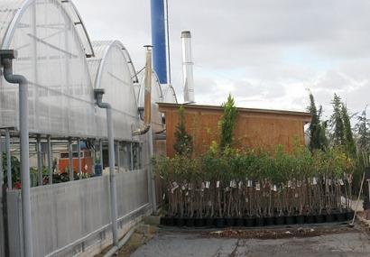 España cuenta con 2.052 calderas de biomasa en grandes instalaciones