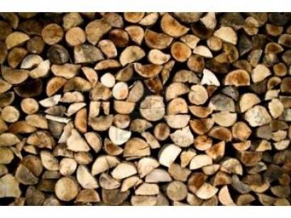 Galicia anuncia un plan de acción integral para la biomasa