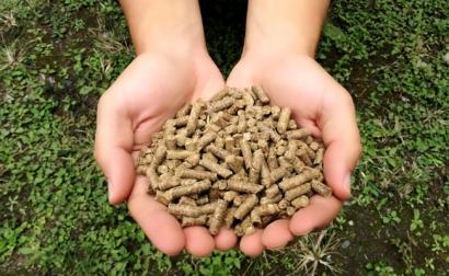 ARGENTINA: Procesan residuos de caña de azúcar para producir pellets