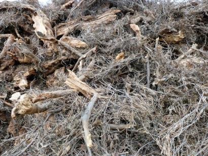 El nuevo PNIEC rebaja los objetivos eléctricos de la biomasa