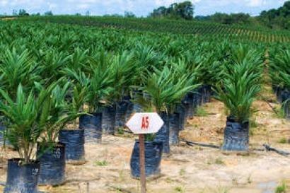 La FAO aboga por afianzar la integración entre bioenergía y seguridad alimentaria