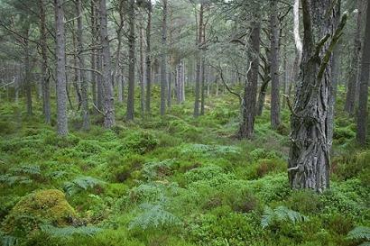 La biomasa para energía podría reducir en un 60% los incendios forestales