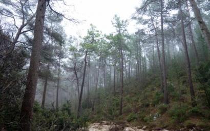 Juntos por los Bosques pide reforzar la demanda de biomasa térmica en el Consejo Forestal Nacional