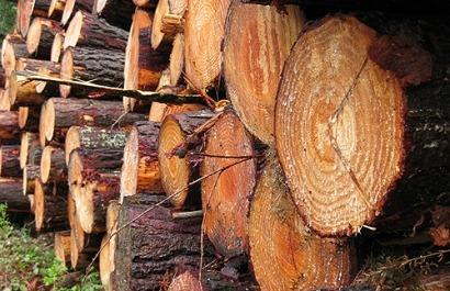 El Gobierno vasco refuerza su apuesta por la biomasa forestal