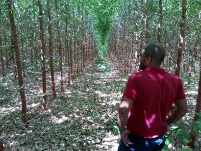 Forestalia recogerá en 2017 su primera cosecha de eucaliptos para biomasa en Cerdeña