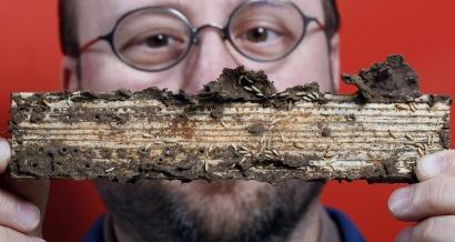 Replican enzimas del intestino de termitas para producir etanol de segunda generación