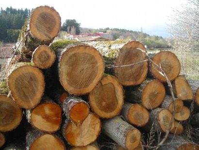 El Gobierno presenta planes para la biomasa forestal pero no invierte en ellos