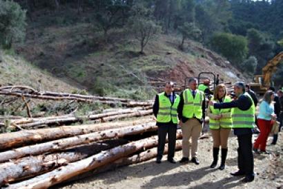 Bioenergía, prevención de incendios y conservación de biodiversidad en montes de Málaga