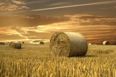 Biomasa, la renovable con mayor número de empleos por MW en 2011