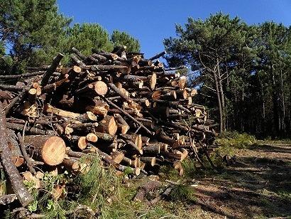 Galicia amplía en 600.000 euros sus ayudas a la biomasa para particulares