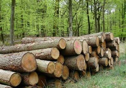 La biomasa verá recortado en un 50% sus ingresos
