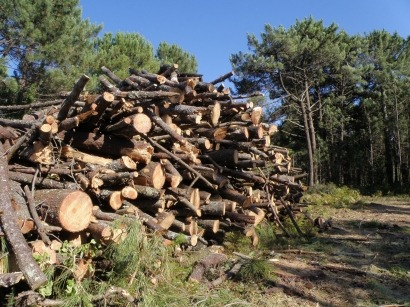 Hay biomasa suficiente para cubrir los objetivos de cinco PER 2011-2020