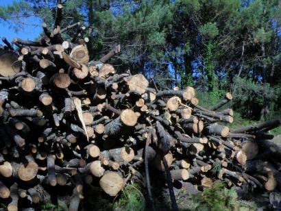 Unión por la Biomasa expone las demandas en biomasa de cara a la elecciones