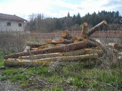 La biomasa deberá reducir un 60% sus emisiones de GEI