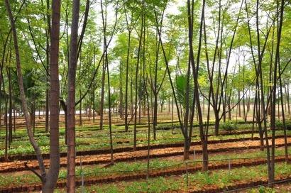 EmpleaVerde cuenta de nuevo con la biomasa para crear empleo