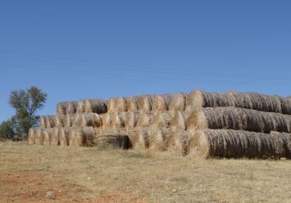 El MAPA publica una orden sobre seguros que afecta a cultivos y residuos agrícolas energéticos