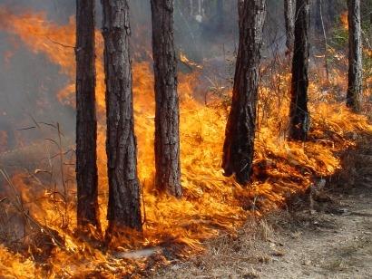 Los incendios se apagan en invierno con bioenergía