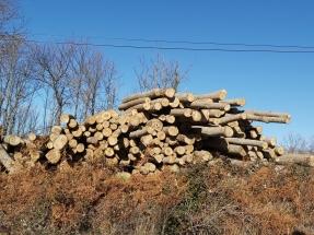 Satisfacción por el reconocimiento de la gestión forestal, biomasa incluida, en la ley de cambio climático