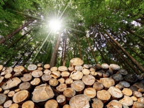 Un informe de la CE sugiere que los criterios de sostenibilidad se apliquen a todos los productos forestales, no solo a la bioenergía