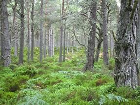 Biomasa forestal, clave en el desarrollo de la bioenergía