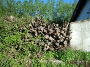 Eubia estima en 269 millones de tep el potencial de biomasa residual en Europa