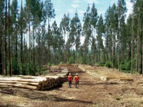 La ciencia irrumpe contra la biomasa forestal para energía, pero también en su defensa